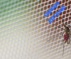 Mosquito en mosquitera