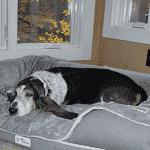 Cama viscoelástica perros grandes