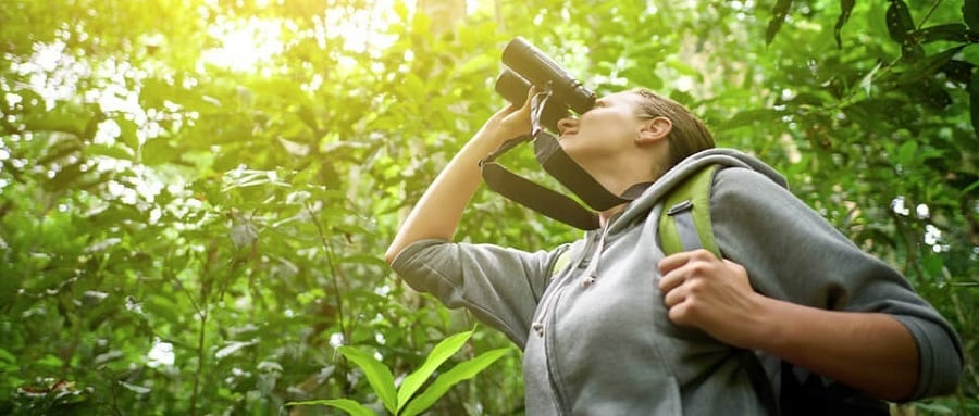 Observacion de aves con prismaticos